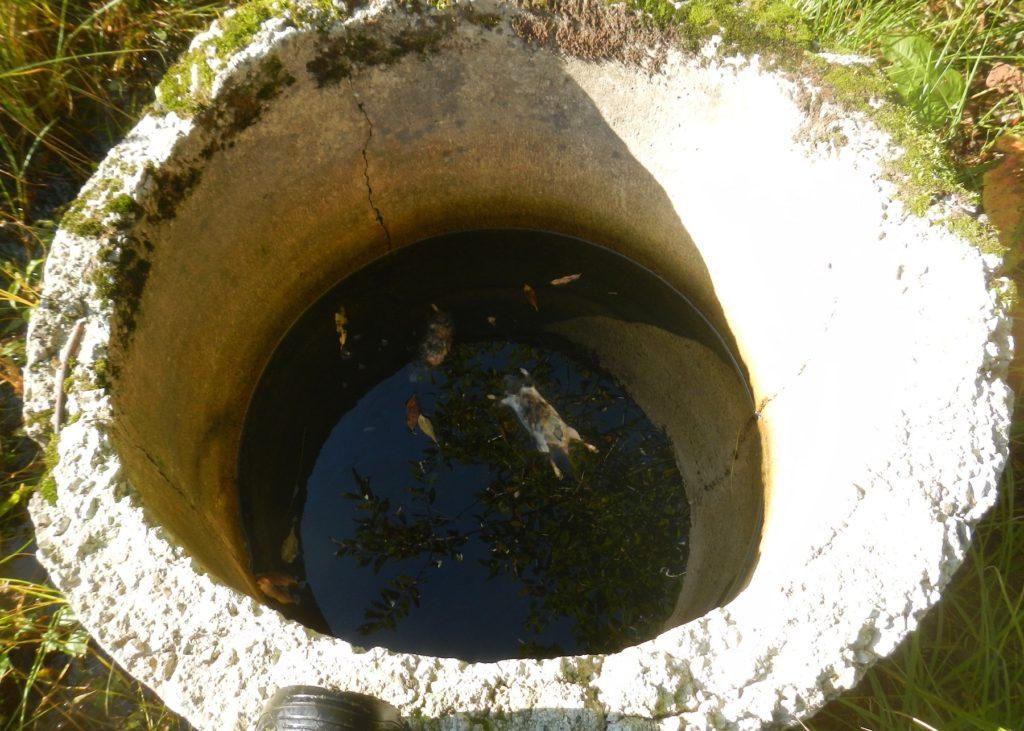 Foto: maaparandussüsteem - drenaažikaevu uppunud loomad
