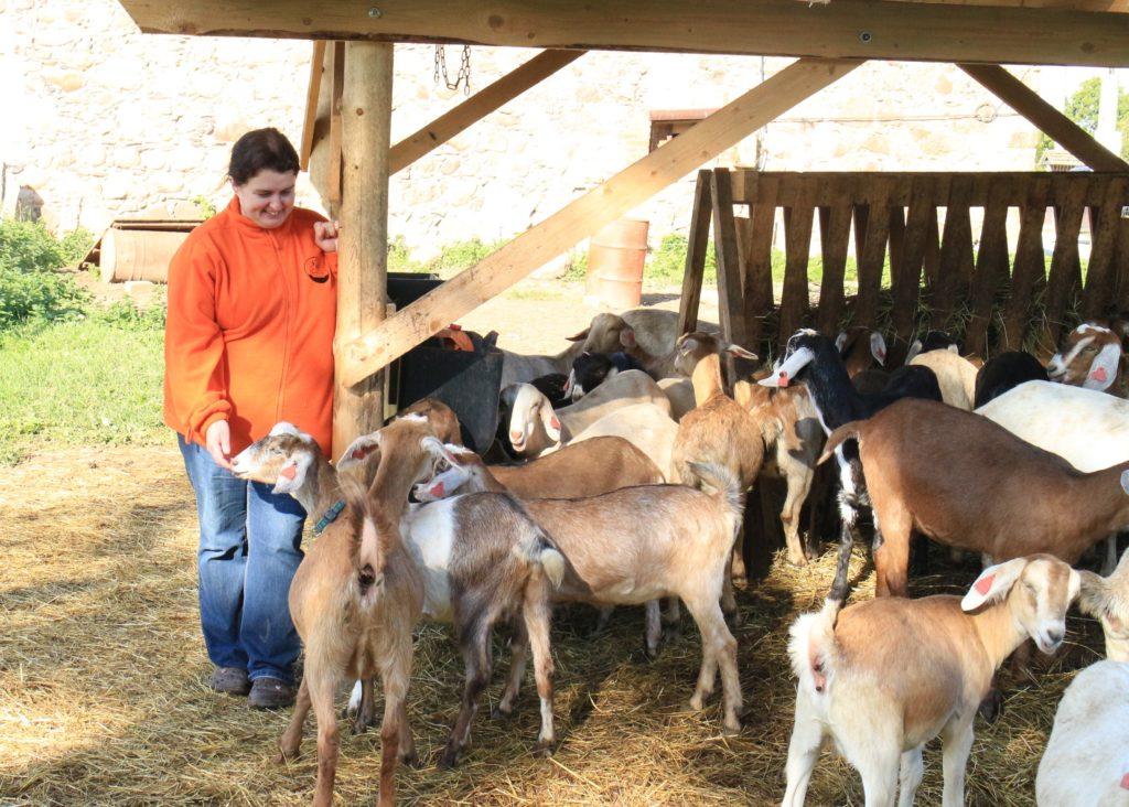 Foto: Üvasi talu kitsekari ja perenaine Anne Grünberg