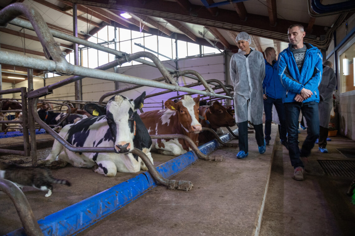 Möödunud aasta sügisel külastas Muraka farmi president Kersti Kaljulaid. Foto: Scanpix/Äripäev/Andras Kralla