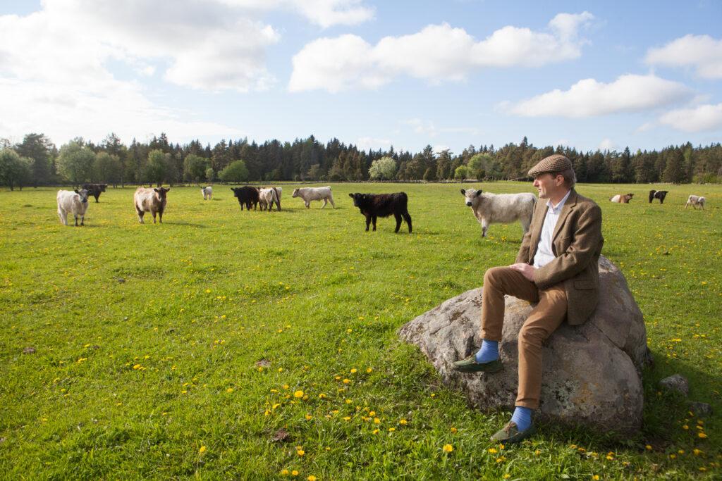 Ando Eelmaa talus kasvab sadakond lihaveist, tõugudest on esindatud Hereford ja Gallovei. Foto: Julia-Maria Linna